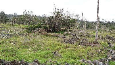 Reforestation in Hawaii